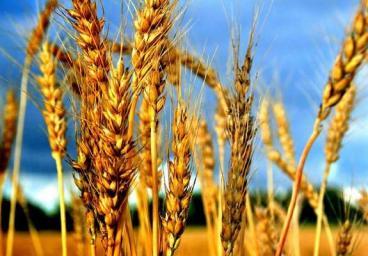 Агрономический аудит